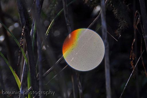 parc naturel de albufera II - reflection of a dewdrop