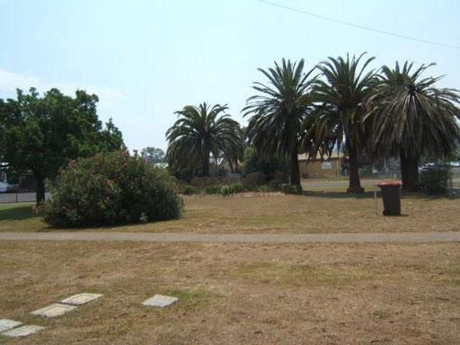Tamworth - palmen am bahnhof