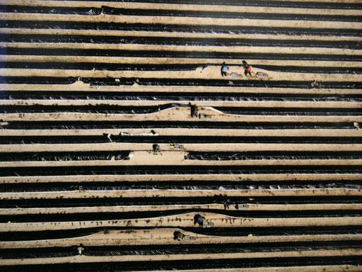 Beelitz, 2007 (Ausschnitt)
