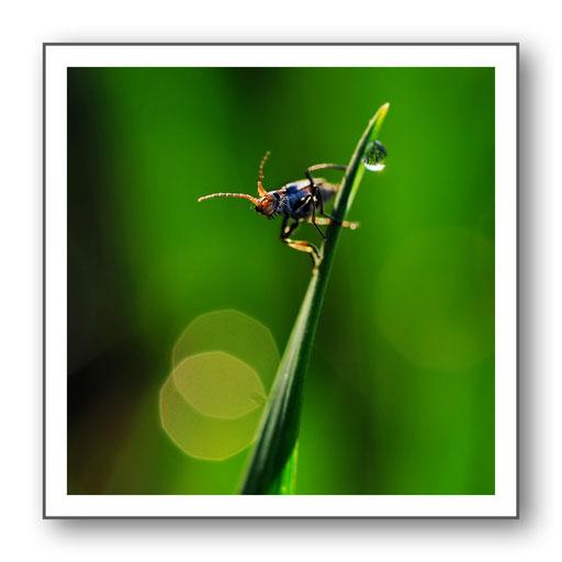 Foto Natur die kleinen Dinge 11