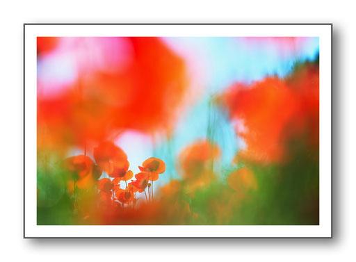 Foto Natur die kleinen Dinge 7