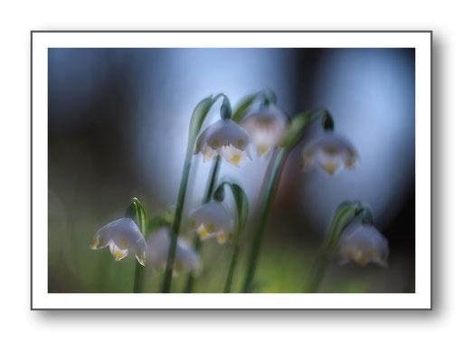 Foto Natur die kleinen Dinge 2