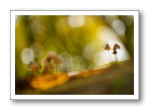 Foto Natur die kleinen Dinge 1