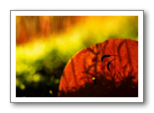 Foto Natur die kleinen Dinge 17