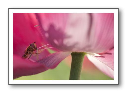 Foto Natur die kleinen Dinge 4
