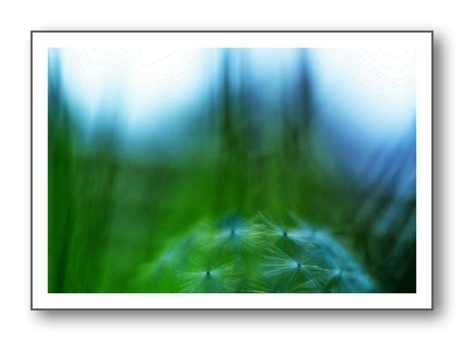 Foto Natur die kleinen Dinge 3