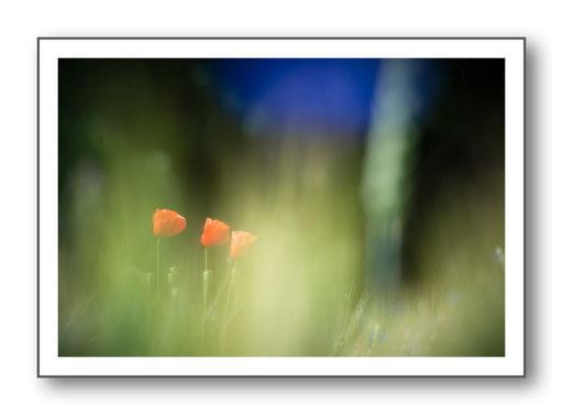 Foto Natur die kleinen Dinge 38