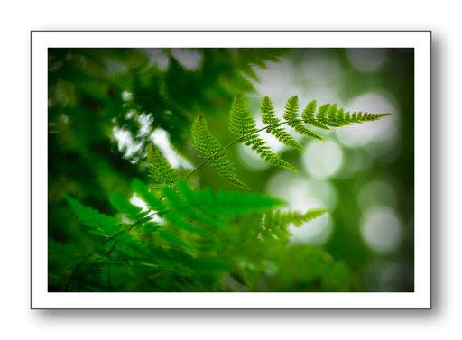 Foto Natur die kleinen Dinge 24