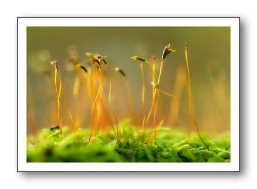 Foto Natur die kleinen Dinge 26