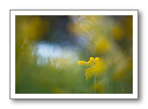 Foto Natur die kleinen Dinge 35