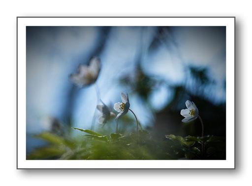 Foto Natur die kleinen Dinge 31