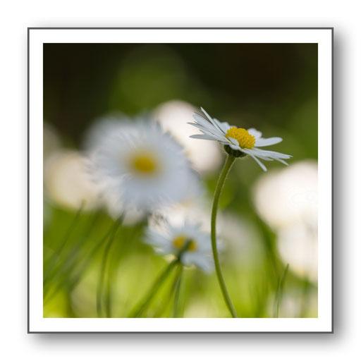Foto Natur die kleinen Dinge 39