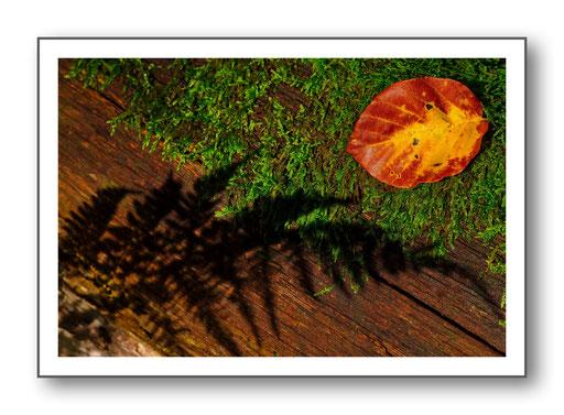 Foto Natur die kleinen Dinge 16