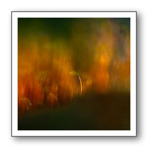Foto Natur die kleinen Dinge 34