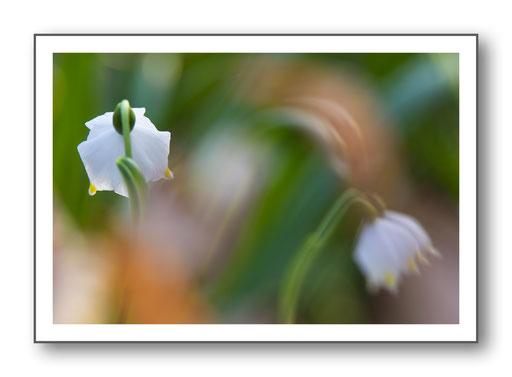 Foto Natur die kleinen Dinge 5