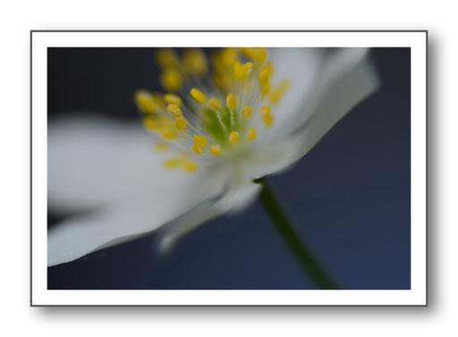 Foto Natur die kleinen Dinge 21