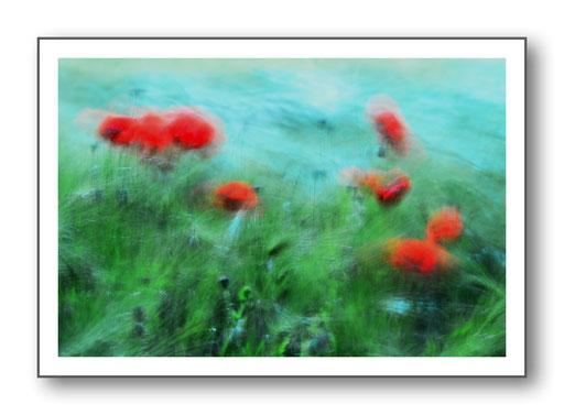 Foto Natur die kleinen Dinge 40