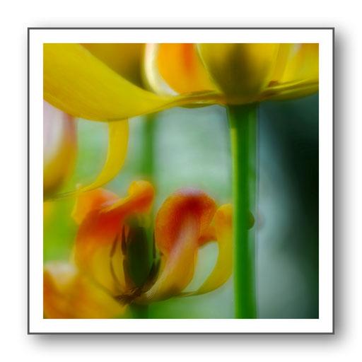 Foto Natur die kleinen Dinge 15