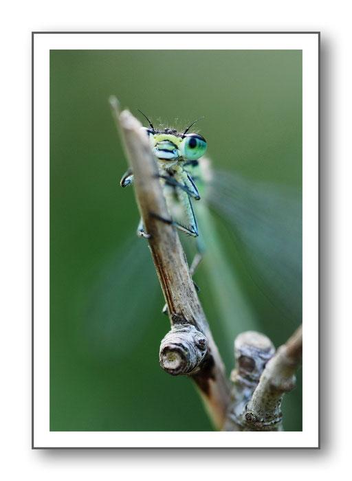 Foto Natur die kleinen Dinge 9