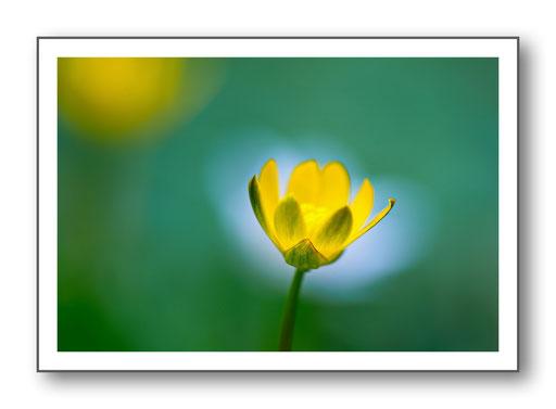 Foto Natur die kleinen Dinge 33