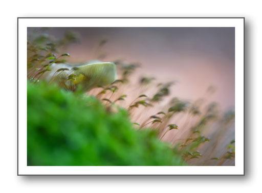 Foto Natur die kleinen Dinge 25