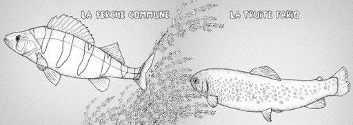 double page du carnet de coloriage, dessins au point