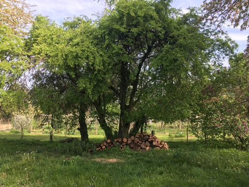 Holzstapel in Naturgarten (Dagmar Schülke)