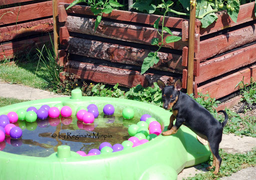 Es hat diese Woche 33 Grad und sie schaut sich mal vorsichtig den Hundepool an.