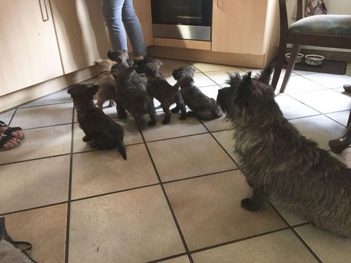 Die Küche ist einfach spannend! Genau wie Mama Tosca beobachtet die Meute genau, was vor sich geht. Könnte ja etwas abfallen...