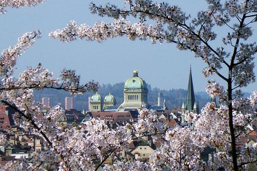 Bundeshus Bern mit de japanische Chirschiblüete vom Rosegarte