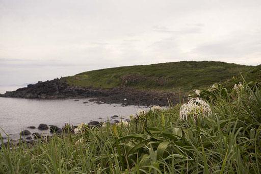 七つの島の中では1番標高が低い島です(小川島)