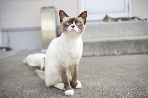 最近は「猫の島」としても知られるように(加唐島)