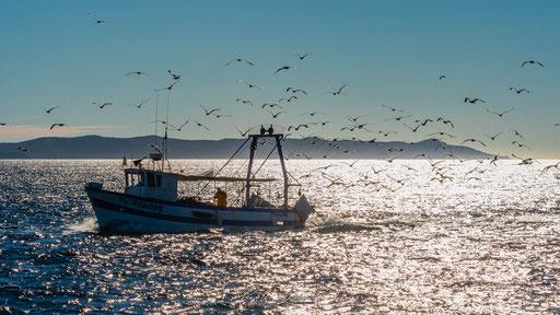 Retour de pêche au large de Toulon - FR83