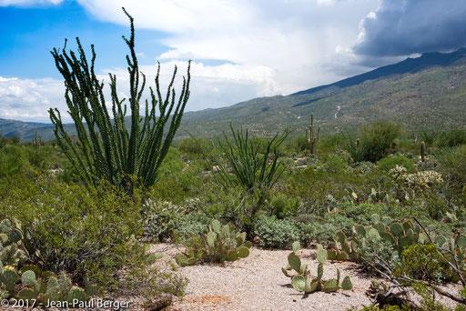 Saguaro National Park & Rincon Moutains -
