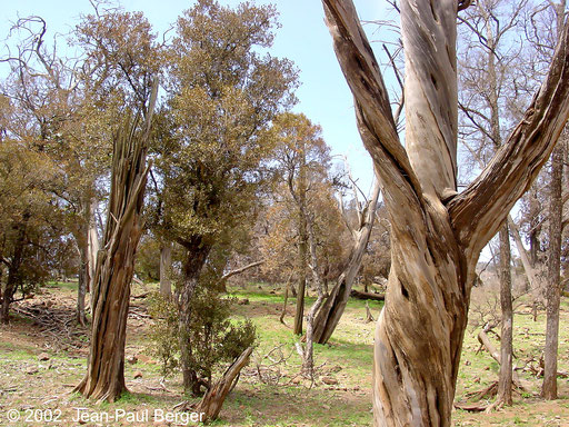 Forêt primaire du Day (Forêt à Ficus, Juniperus…), témoin du climat montagneux lors de la dernière période glaciaire. Disparition liée au réchauffement climatique, à la surexploitation humaine pour le bois de chauffage et au surpâturage.