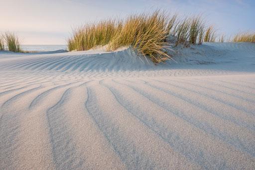 Helmgras in de duinen Noordzeestrand Terschelling © Jurjen Veerman