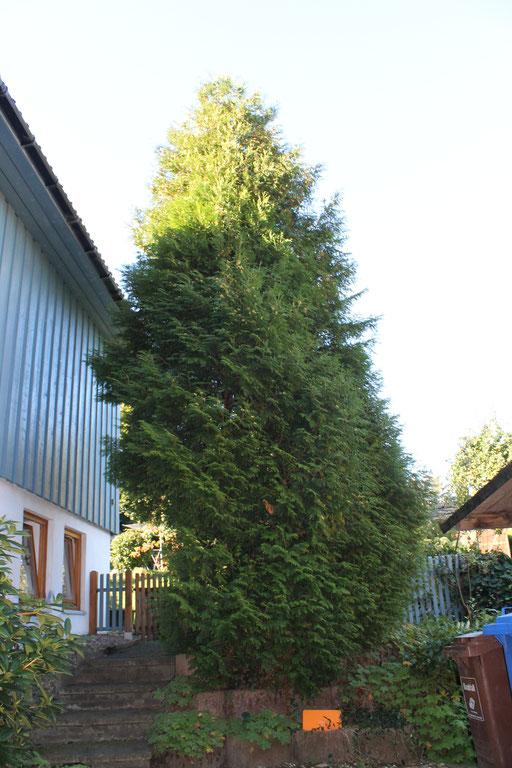 Nistkastenbaum-Beet - Tuja nicht zuviel Raum