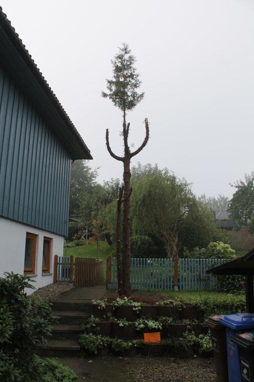 Der Nistkastenbaum entsteht