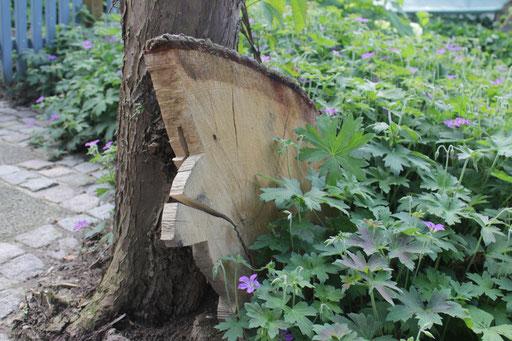Baumscheiben als Deko im Nistkastenbaum-Beet