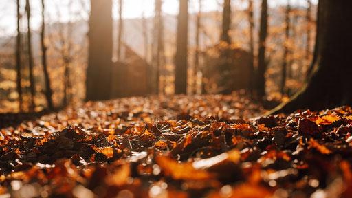 Herbstlaub, Bild: Melanie Többe