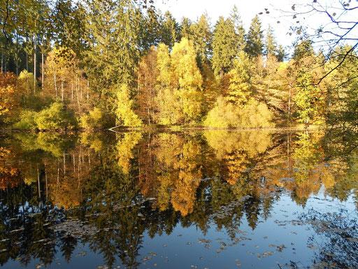 """""""Neuer Teich"""" im Herbst."""