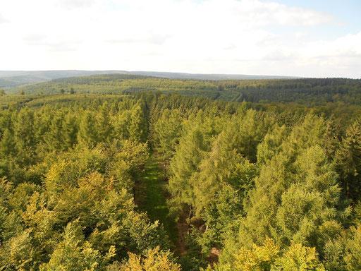 Blick vom Sollingturm, Bild 3.
