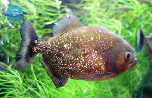 Fisch Zoologischer Stadtgarten Karlsruhe