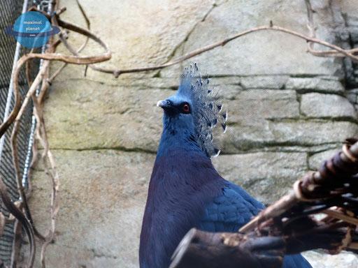 Vogel Zoologischer Stadtgarten Karlsruhe