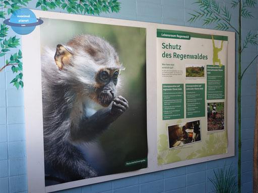 Schautafel Zoologischer Stadtgarten Karlsruhe