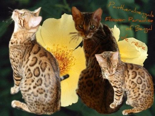 Flower Paradise de Panthera