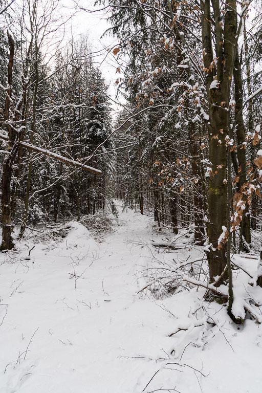 Verschneiter Waldweg