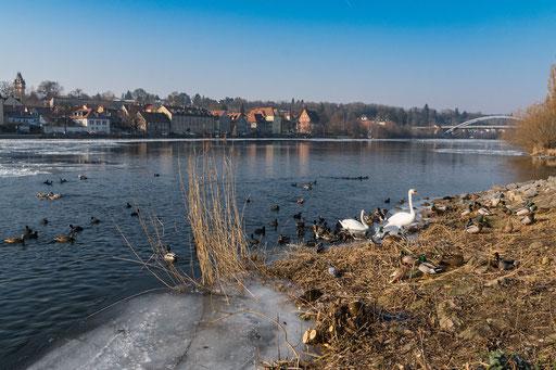 Wasservögel an der Bimbachmündung