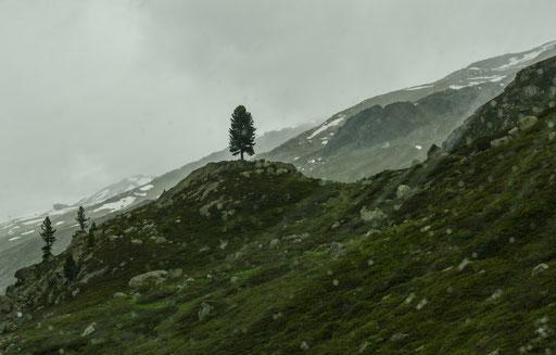 Wie ein Finger ragt der einsame Baum aus der kargen Gebirgslandschaft