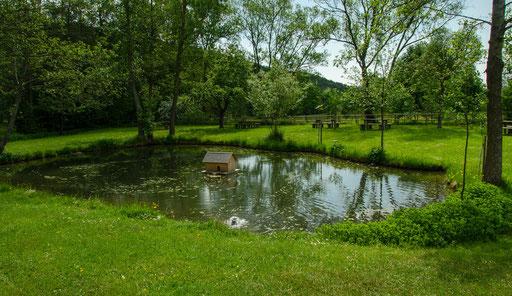 Teichanlage mit Picknickmöglichkeit